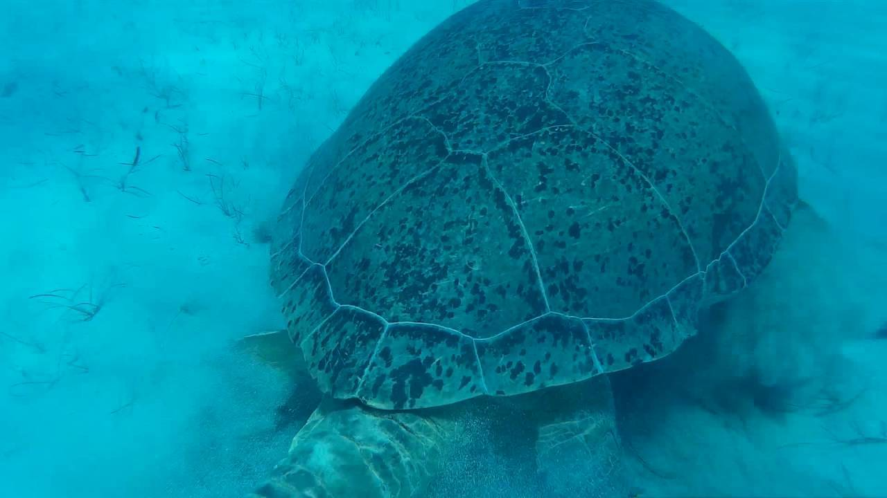 Черепаший пляж парамали (paramali turtle beach)