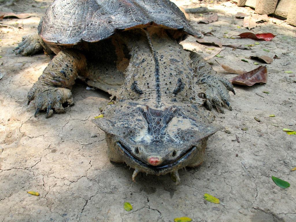 Сонник укусила ядовитая черепаха. к чему снится укусила ядовитая черепаха видеть во сне - сонник дома солнца. страница 3
