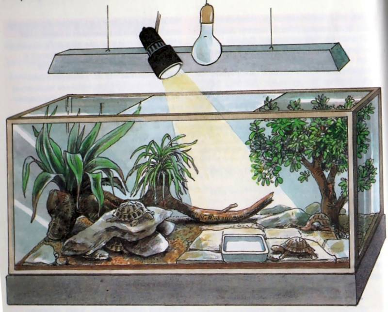 Как сделать террариум для сухопутной черепахи своими руками