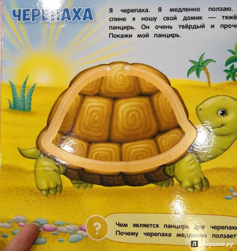 Кто на свете ходит в каменной рубахе? загадки про черепаху для детей