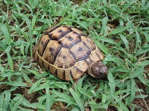Чем кормить черепаху в домашних условиях? чем кормить сухопутную, водяную, речную, болотную черепаху?
