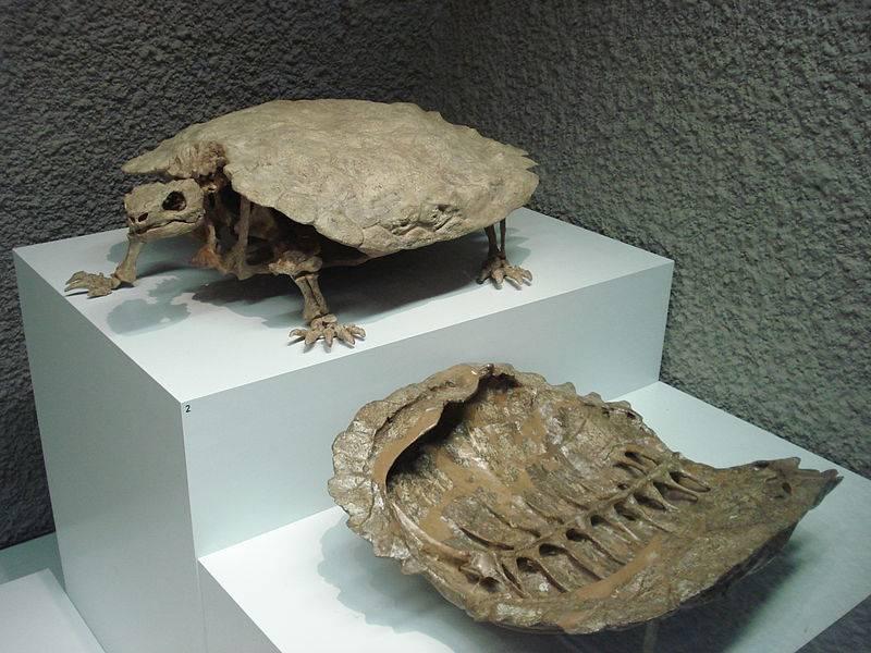 Черепаха - всё о животных