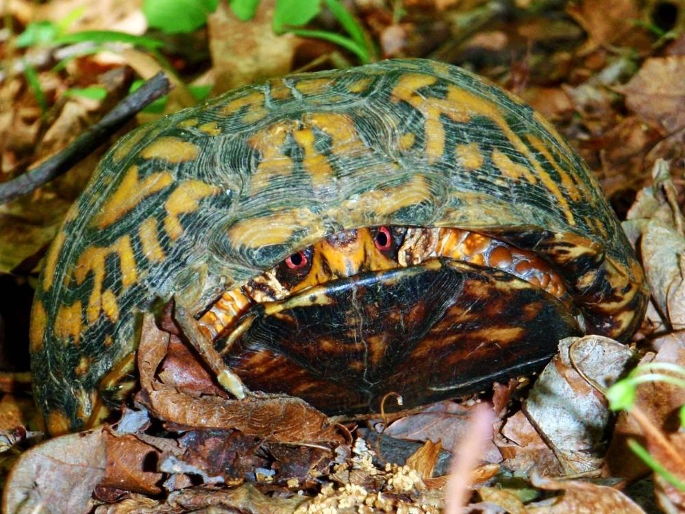 Когда тортилла не в духе: 5 самых опасных черепах планеты