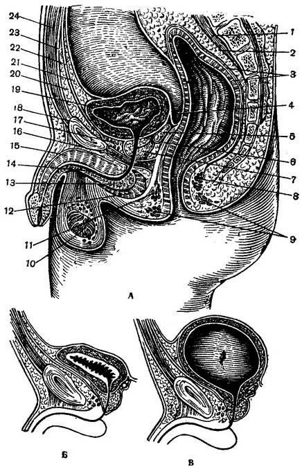 Какие симптомы и признаки имеет опущение матки. если врач выявил опущение матки, требуется обязательное лечение. если лечение не проводится, то болезнь прогрессирует.