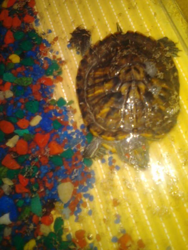 Все о черепахах.