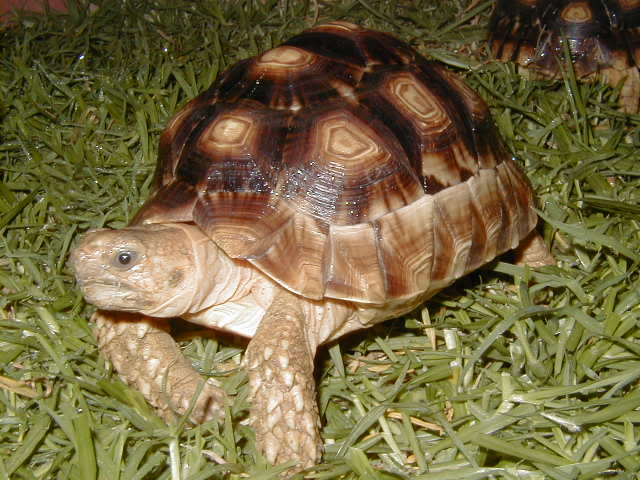Гибрид (биология) - hybrid (biology) - qwe.wiki