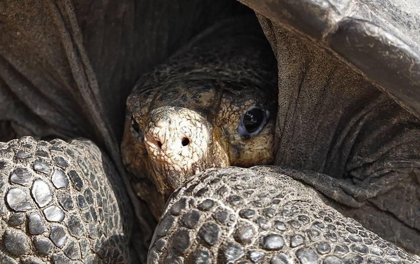 Животные, вымершие после 1500 года — википедия. что такое животные, вымершие после 1500 года