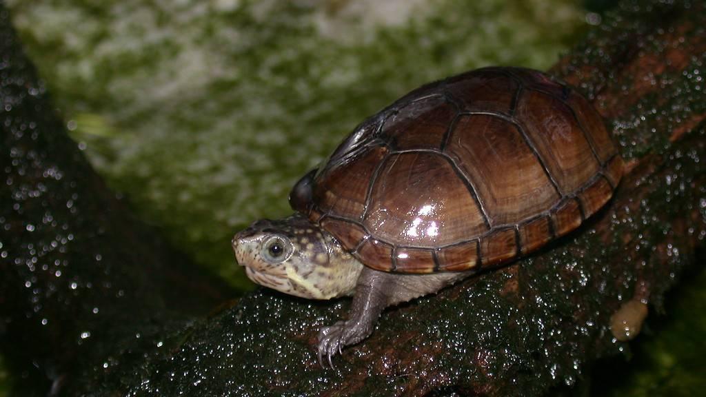 Самые ,самые - черепахи
