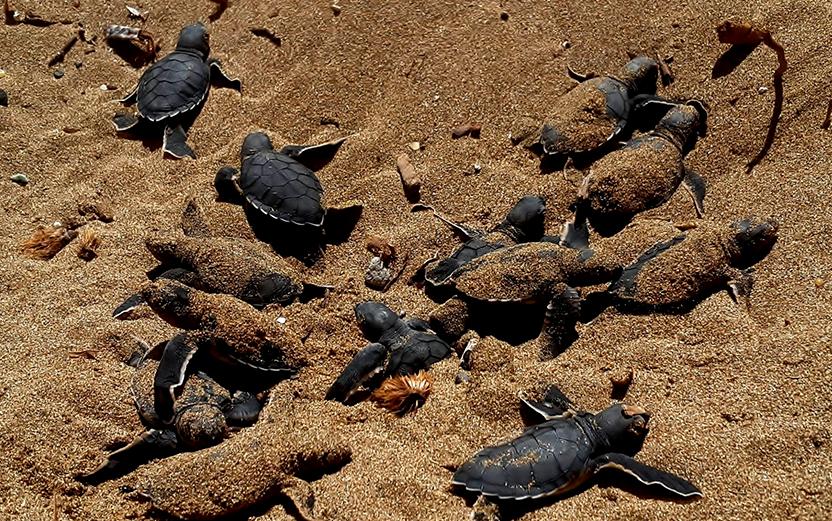 Черепаший пляж около авакаса