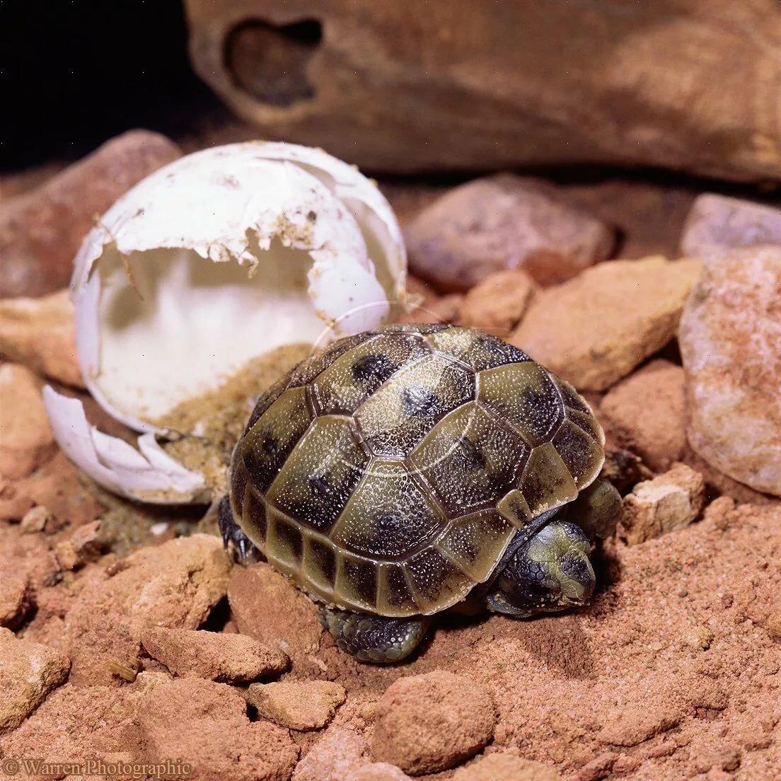 Выживет ли сухопутная черепаха зимой на улице. спячка черепах, полезные советы владельцу