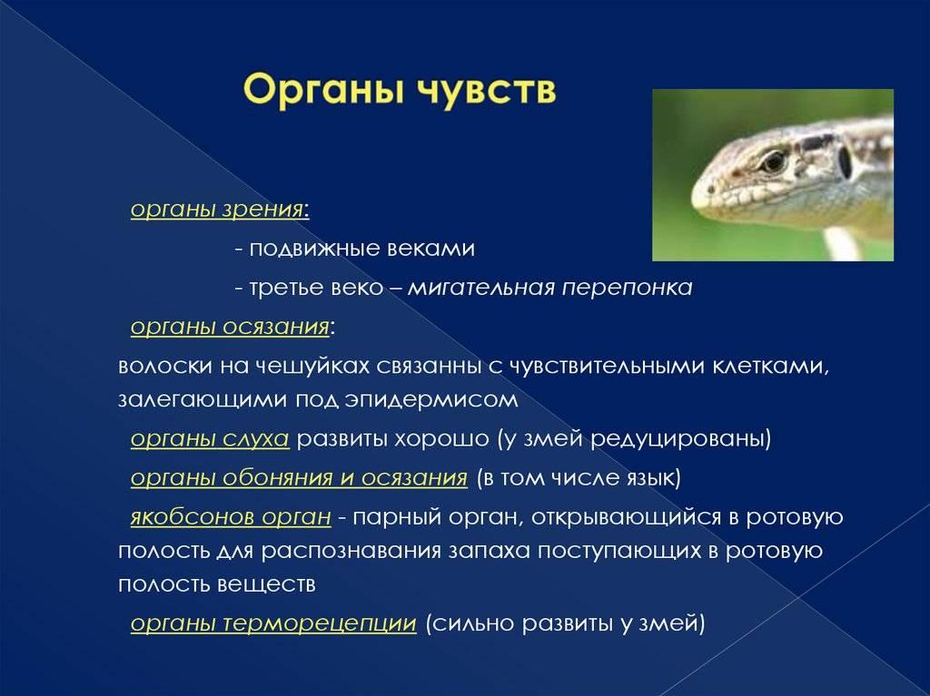 71304-1 (гипо и гиперавитаминозы у рептилий)