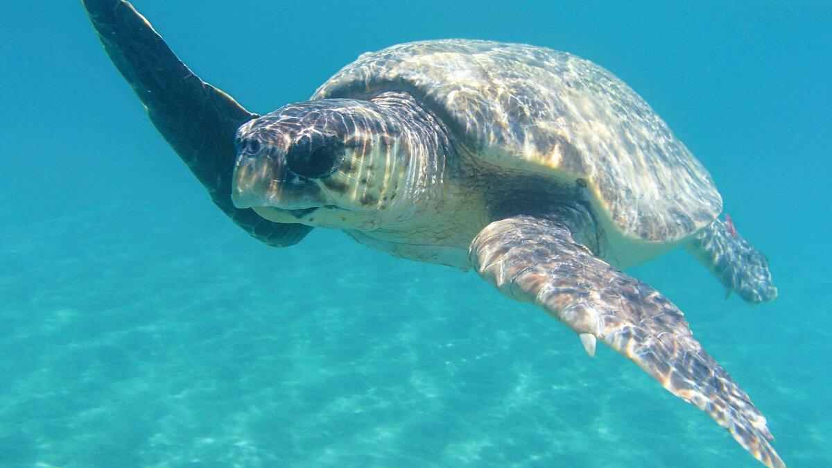 У берегов лимассола обитает семейство черепах!