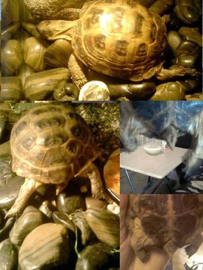 Черепахи в домашних условиях: сколько живут и как узнать их возраст