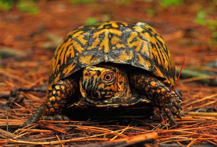 Сонник ядовитая черепаха. к чему снится ядовитая черепаха видеть во сне - сонник дома солнца. страница 6
