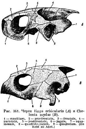 Кости головы (череп). анатомический атлас человека