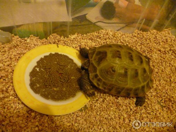 Чем нельзя кормить черепаху