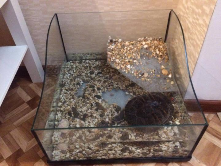 Как выбрать террариум для сухопутных черепах?