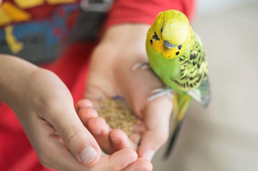 Если вы решили завести попугая