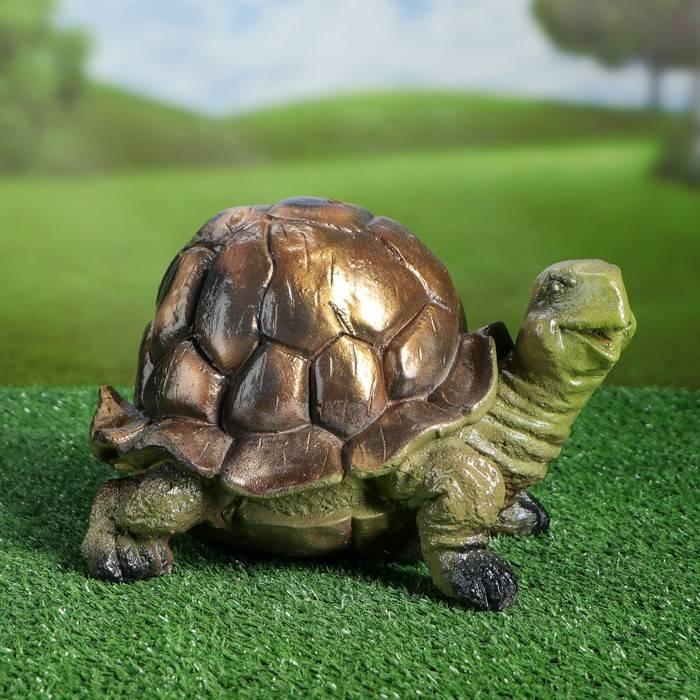 Cuora amboinensis (амбоинская черепаха)