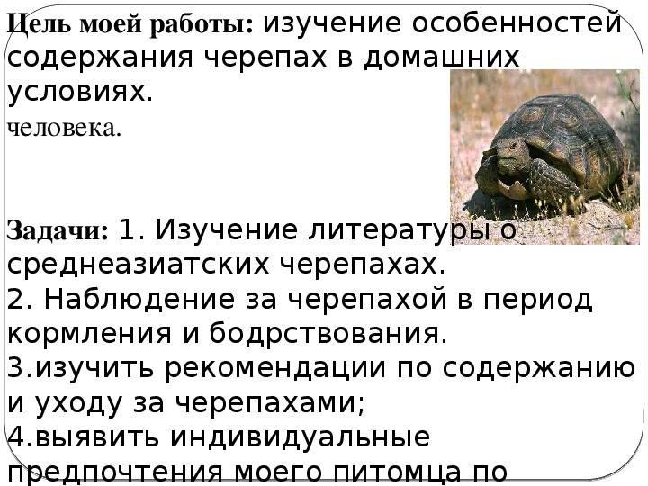 Европейская болотная черепаха – неторопливый друг