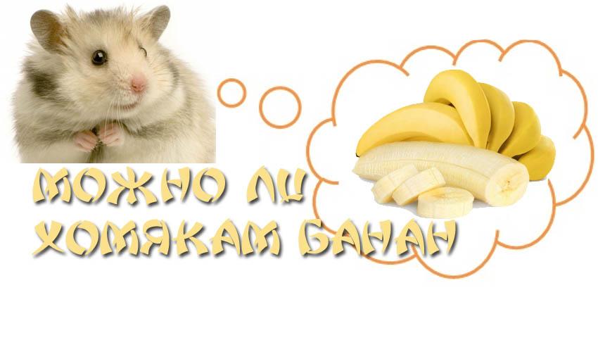 Кормить ли хомяков бананами?