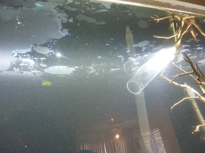 Проблемы с водой в аквариуме