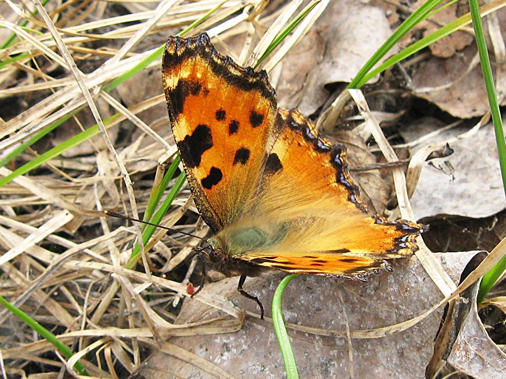 Сколько живут бабочки в домашних условиях и в дикой природе