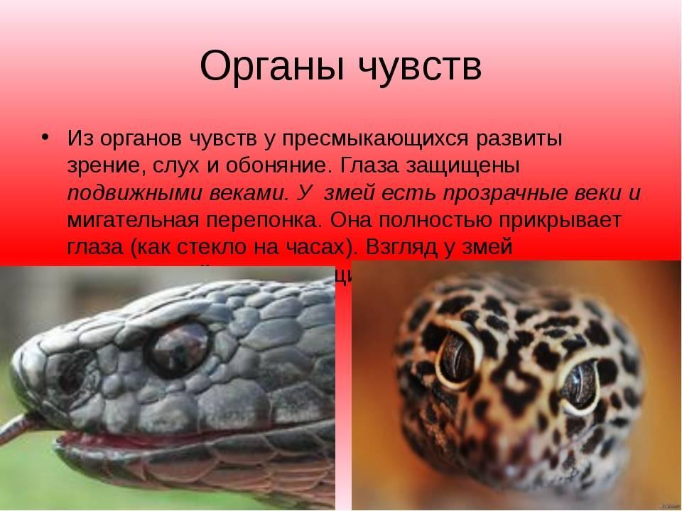 Пресмыкающиеся. отличие пресмыкающихся от других животных