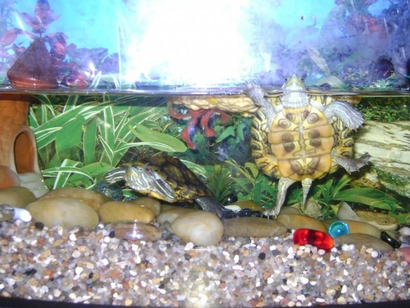картинки аквариума для черепашки беседки качественной древесины