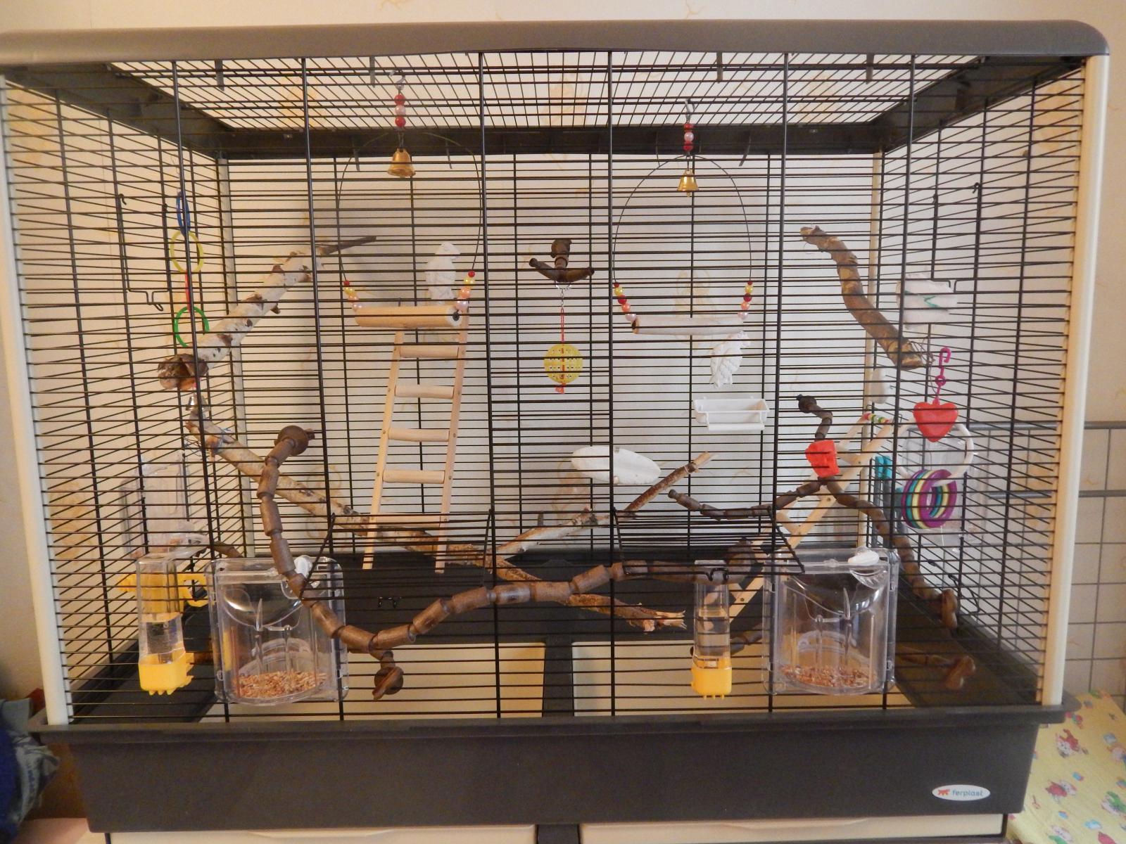 Что нужно волнистому попугаю в клетке