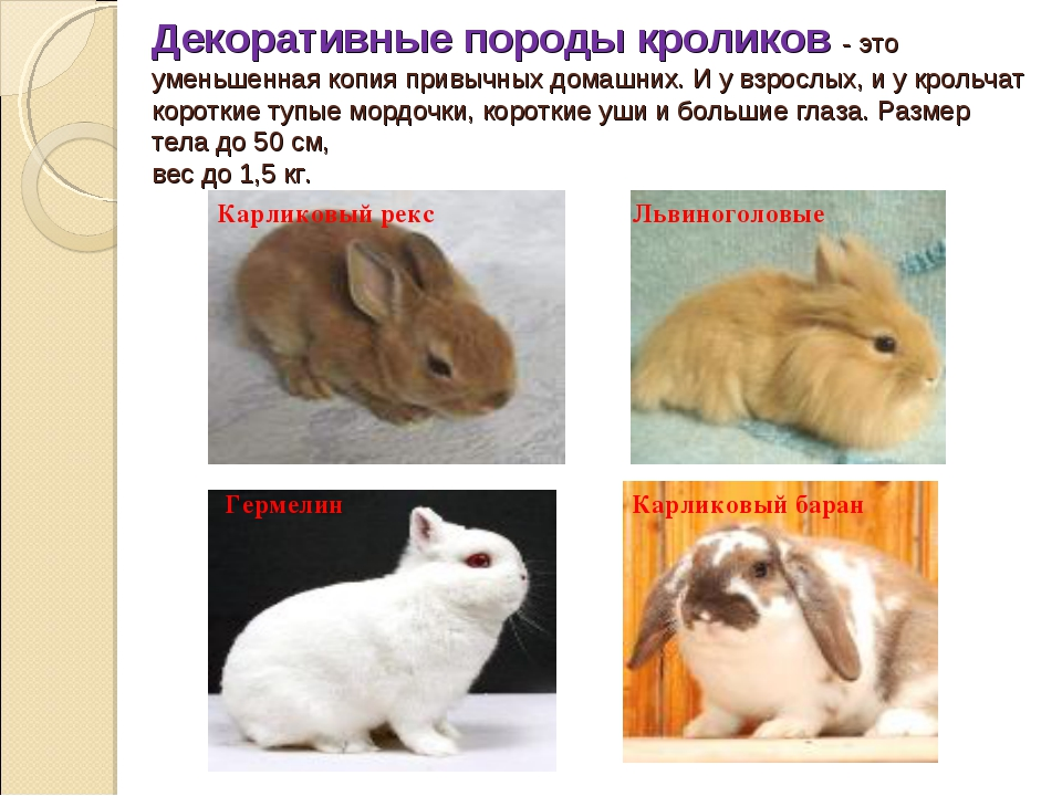 Имена для карликовых кроликов: как назвать любимца?