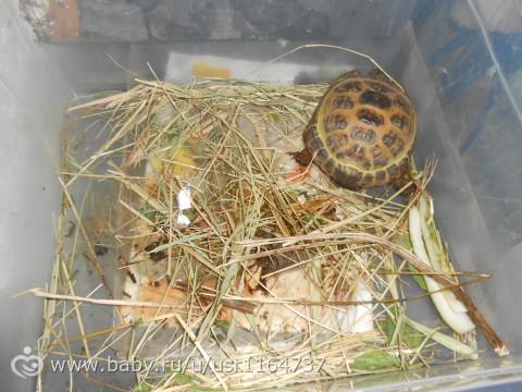 Аллергия на черепаху красноухую