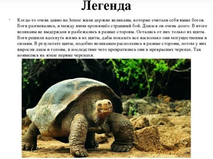 Умная черепаха. мифы, ошибки и заблуждения о черепахах