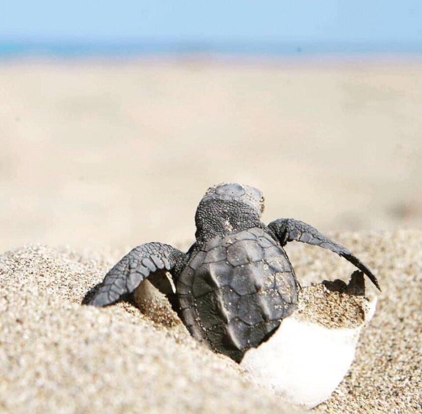 Кипр борется за выживание черепах