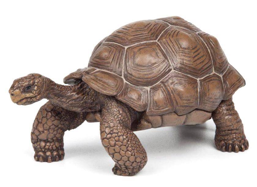 Graptemys pseudogeographica (псевдогеографическая черепаха)
