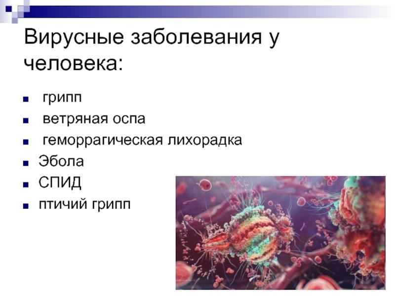 Вирусы и вирусные заболевания