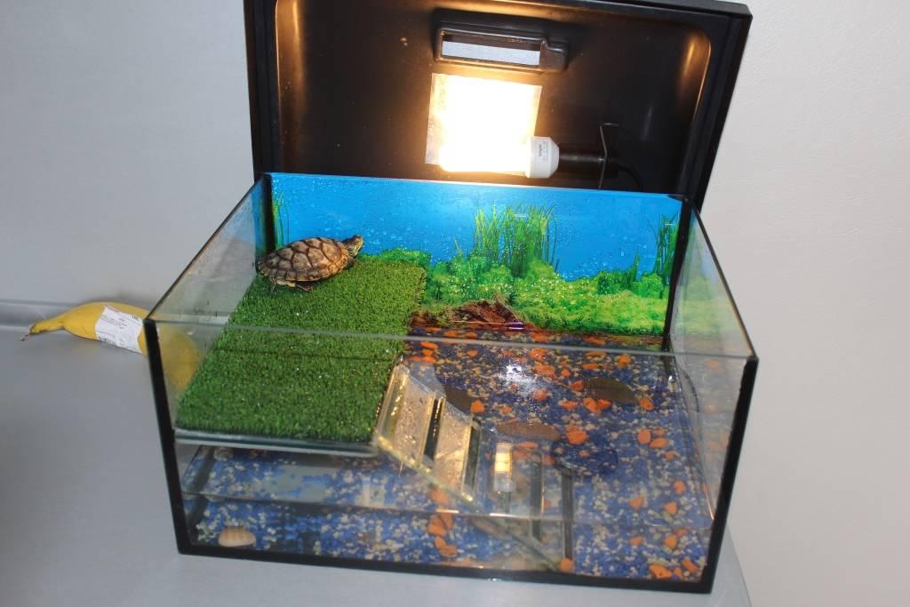 Красноухая черепаха - черепаха пытается вылезти из аквариума - запись пользователя дирли ду (kassir) в сообществе домашние животные в категории улитки, черепахи, рептилии - babyblog.ru