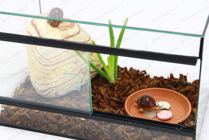 Температура и влажность в аквариуме для улиток