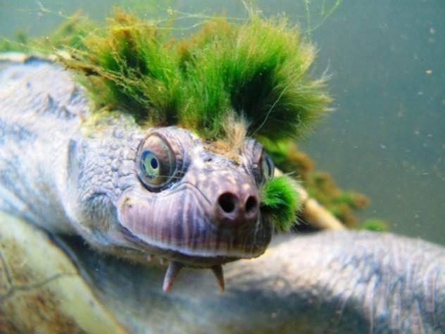 Черепаха улыбается