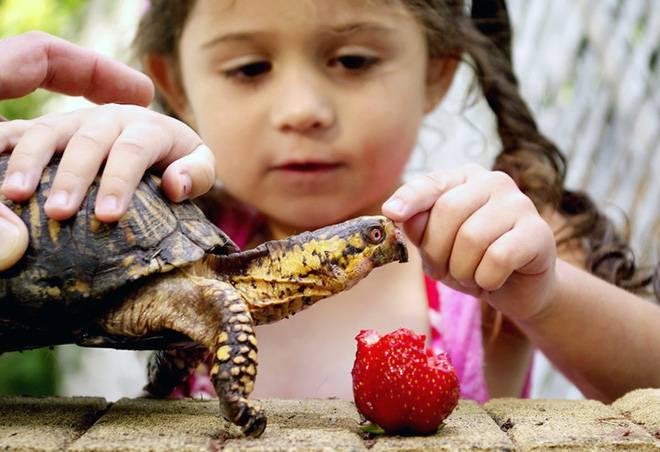 Ребенок и черепаха
