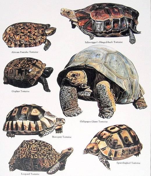 Некоторые виды черепах