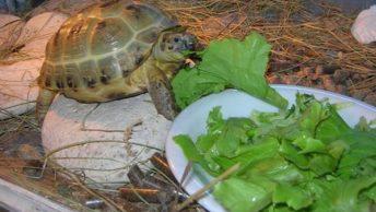 корм для черепах дома