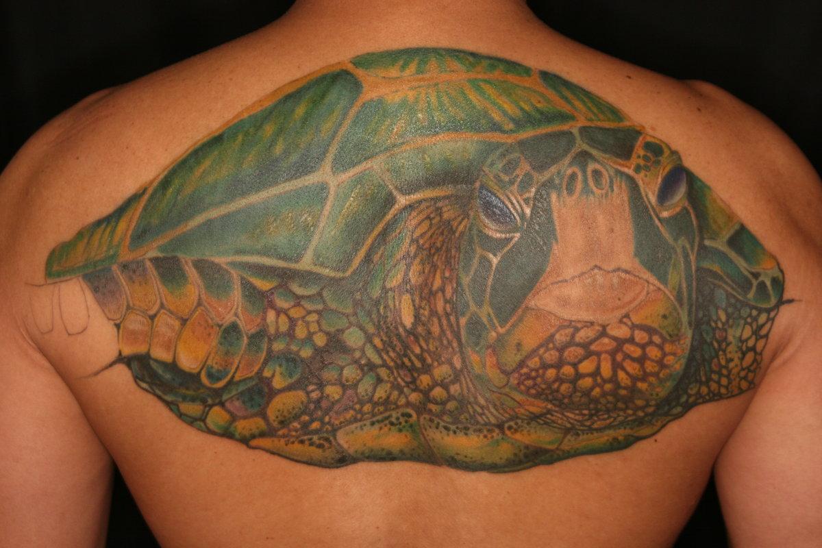 Свойства и значение талисмана черепахи