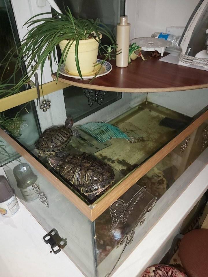 Островок (берег) для красноухой черепахи