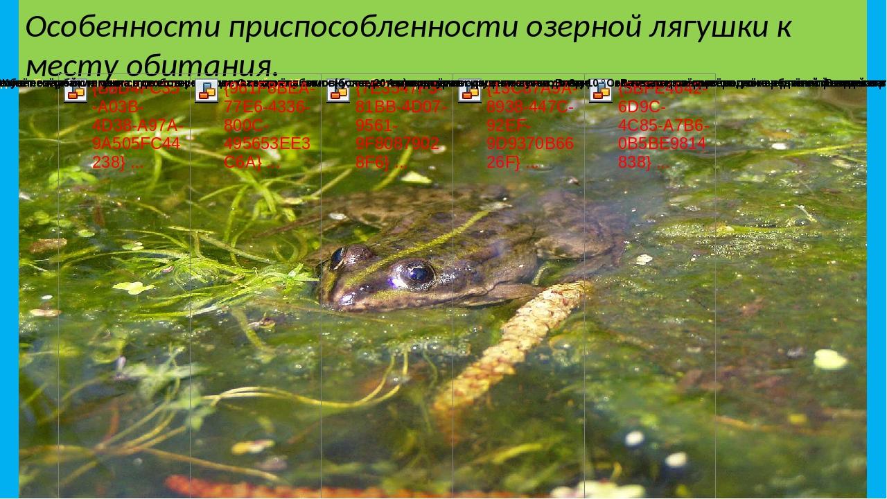 Озерная лягушка