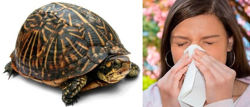 Чем опасна аллергия на черепаху: симптомы, причины и особенности лечения