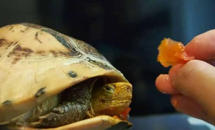Аллергия на черепах