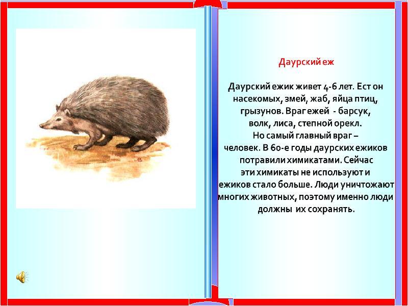 Даурский еж