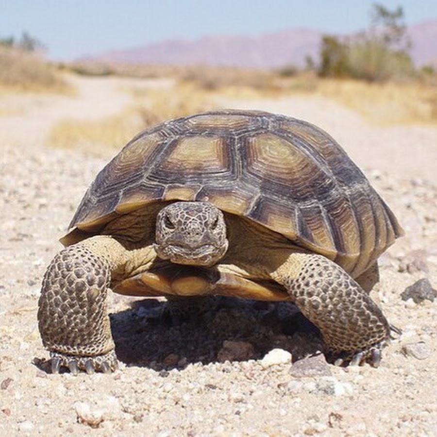 Где живут черепахи? виды и описание черепах