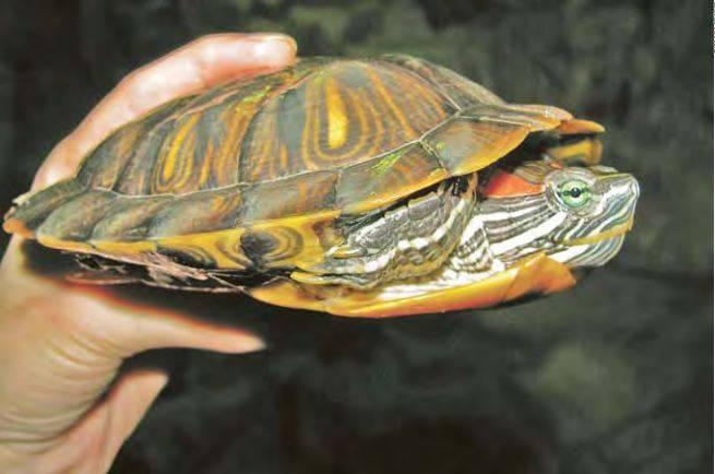 Как правильно выбрать черепаху